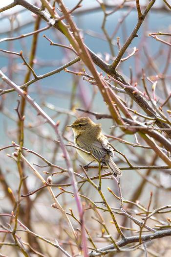 Bird perching on branch