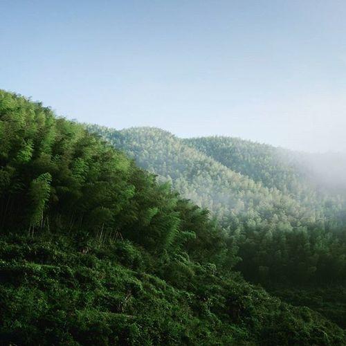 Yunhe LIshui,China Zhejiang Bamboo Bamboo Forest