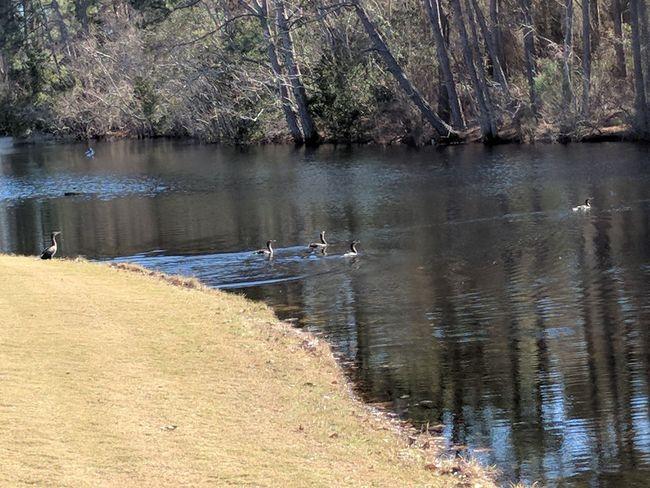ducks swimming Animals In The Wild Animal Themes Water Tree Bird Animal Wildlife Nature