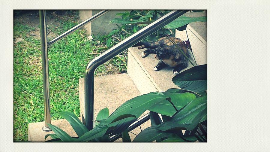 ♡ Cat Cat ♡