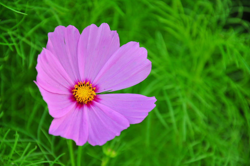 Flower Purple Plant Leaves Green No People Yellow No Sound Without Silence Blooming
