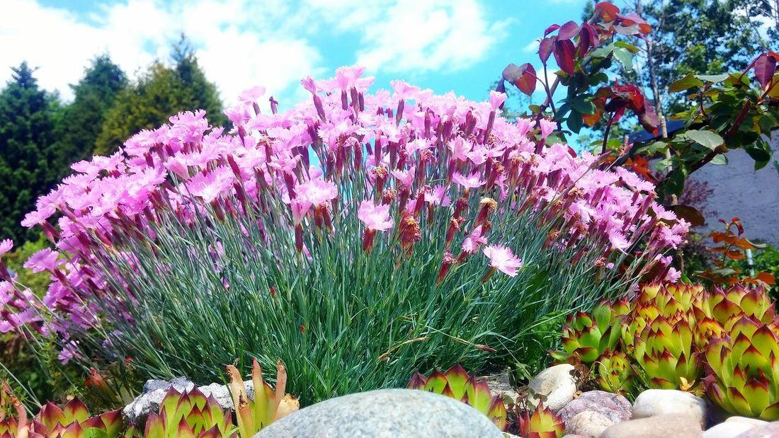 Nature Natura Przyroda Działka Poland Tarnowskie Góry Kwiaty Flowers Beauty