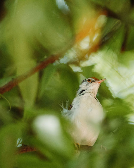 Animal Themes Bird Animal Vertebrate One Animal Animals In The Wild Animal Wildlife Selective Focus No People Nature Close-up Plant Perching Day Tree Plant Part Leaf Beauty In Nature Outdoors Branch
