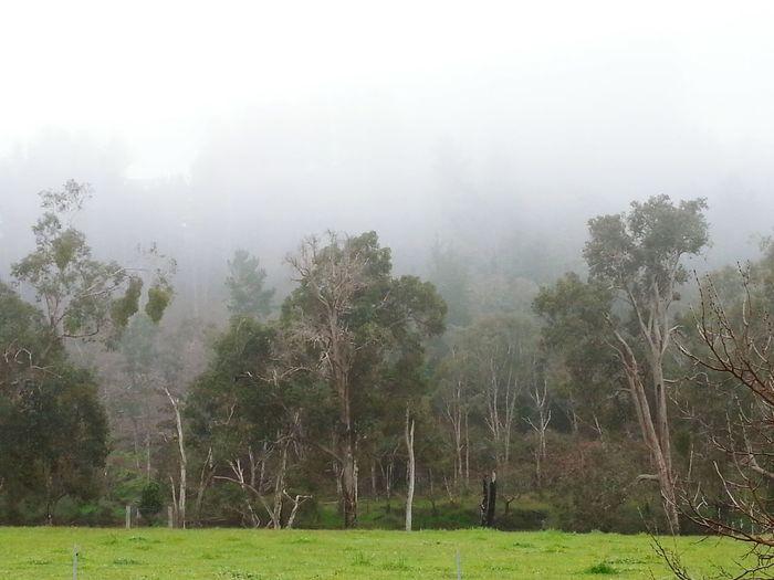 Bridgetown Western Australia River Blackwood River Farm Misty Morning