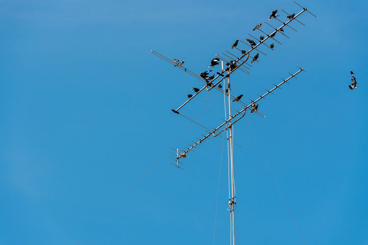 Low angle view of birds perching on television aerial against clear blue sky