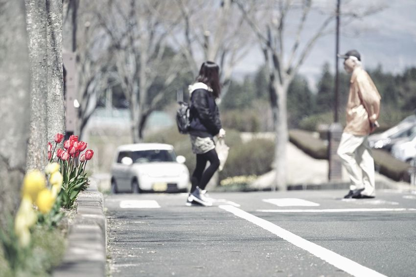 Capture The Moment Depth Of Field Tulips🌷 Two People Walking Full Length Bokeh Photography Outdoors Real People Uzuki Of The Flower Selective Focus Snapshots Of Life Springtime Transportation Park Landscapes Tranquility Crosswalk Fine Art Full Frame Detail Sigma SONY A7ii EyeEm Best Shots 17_05 The Street Photographer - 2017 EyeEm Awards EyeEmNewHere Live For The Story