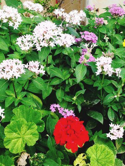 Pretty Flowers Beauty In Nature Camp Courtney OKINAWA, JAPAN