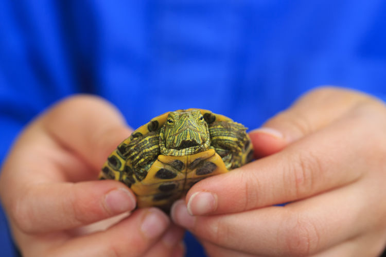 Child Holding Newborn Turtle In Hands