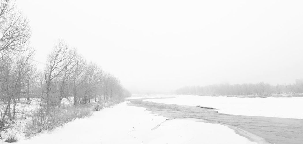 Winter .. still. Silent. Waiting. Silence Waiting The Week on EyeEm Black & White Bnw Quiet Moments Plant Nature Tranquil Scene Snow Non-urban Scene Scenics - Nature No People Outdoors