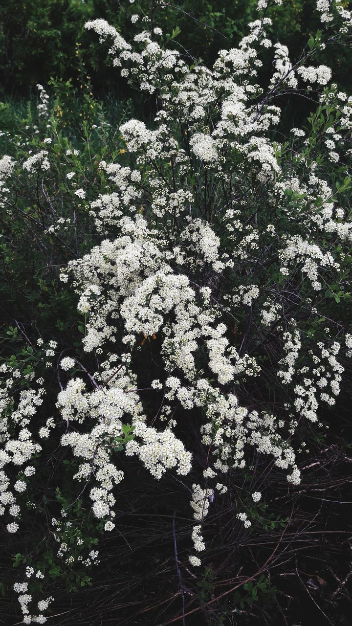 growth, nature, flower, blossom, spring, plant, delicate, tissue, summer, foliage, no people, beauty in nature, outdoors, day
