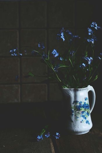 Taking Pictures Still Life Minimalism Taking Photos Colors Of Life Fine Art Photography Spring Forget-me-not Blue Flowers Blue Flowers Mood Of The Day Spring Flowers Springtime