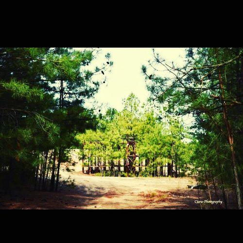 Beautiful Nature Nature Photography Distant Growing Nikond7200 Naturelover Nature Walk Trees
