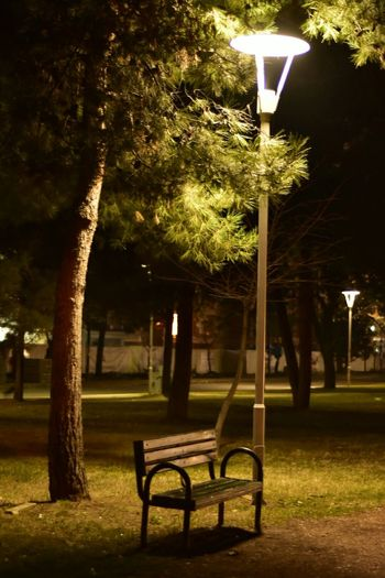 Tree Outdoors No People Nature EyeEm Night Photography Bursa / Turkey Nofilter Close-up EyeEm Gallery EyeEm Best Shots Landscape Leaves Nightphotography Lonelyness Loneliness Lonely Autumn🍁🍁🍁 Autumn Bank