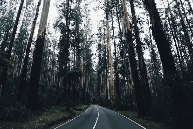 the woods they wind dark and sweet The Black Spur Black Spur Black Spur Road Winding Road Woods WoodLand Trees The Great Outdoors - 2016 EyeEm Awards The Landscapist - 2016 Eyeem Awards Natures Diversities Eye4photography  EyeEm Best Edits On The Road EyeEm Best Shots Travelling Nature_collection Nature Feel The Journey Original Experiences An Eye For Travel