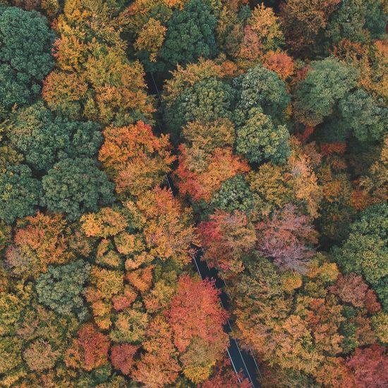 Full frame shot of autumnal trees