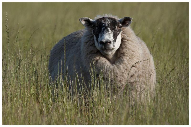 Portrait of an animal on field