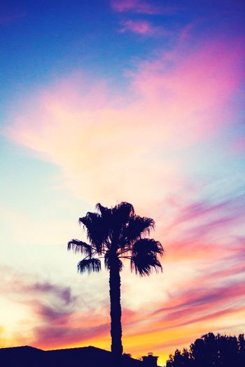 California Palm Trees Sunset Sky