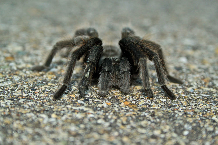 Adventure Adventures Animals In The Wild Spider Tarantula Wild