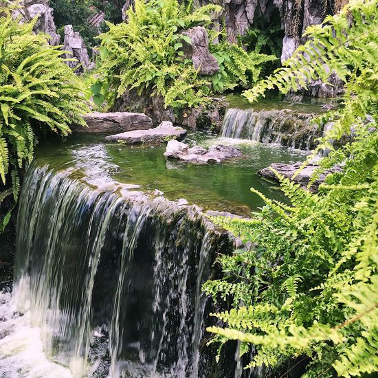 Waterfall Rock - Object Water Nature No People Plant Outdoors Day Motion Tree Beauty In Nature Scenics Forest Growth Lost In The Landscape