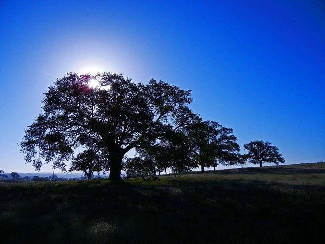 Tree Blue Clear Skies