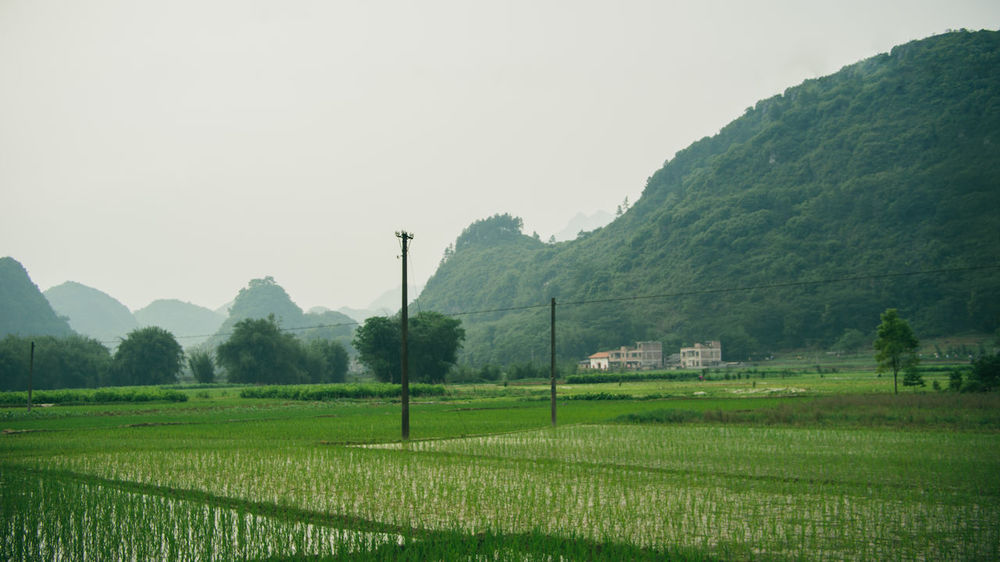 Beauty In Nature China Cultivated Land Field Grass Green Color Growth Guangzhou Landscape Mountain Nature Outdoors Sky Tree
