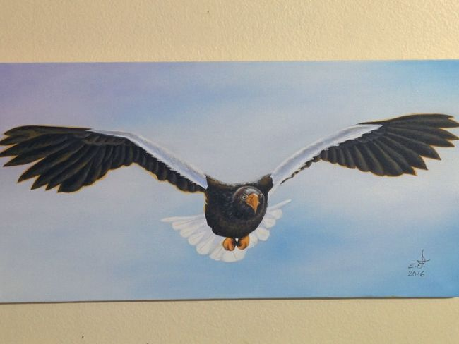 """Japanese sea Eagle ,this precious bird of pray only exist in northern part of Japan migrated from Russia with population of about 500 known in the world ,if we don't support them today we will loose them tomorrow and forever.oil on canvas 18""""_34"""". Japanese Sea Eagle Bird Of Prey Spread Wings Animals In The Wild Animal WingMy Art Colllection Flying Sea Bird Majestic Oil Painting Fine Art Cretiveart Drawing Art, Drawing, Creativity Love Of Animals Nature Beauty In Nature Friendship. ♡   Love ♥ Koi."""