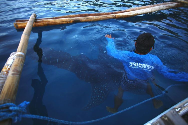 High Angle View Of Man By Whale Shark Swimming In Sea