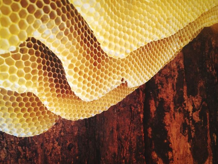 Beehive Bee The Architect - 2015 EyeEm Awards EyeEm Nature Lover Yellow Nature Photography Geometric Abstraction Open Edit Market Bestsellers April 2016 Bestsellers
