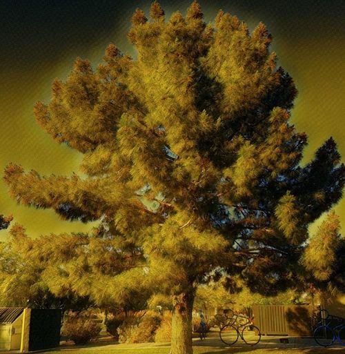 Golden hour Growth Yellow Tree No People Outdoors Day Nature Beauty In Nature Architecture Sky Close-up