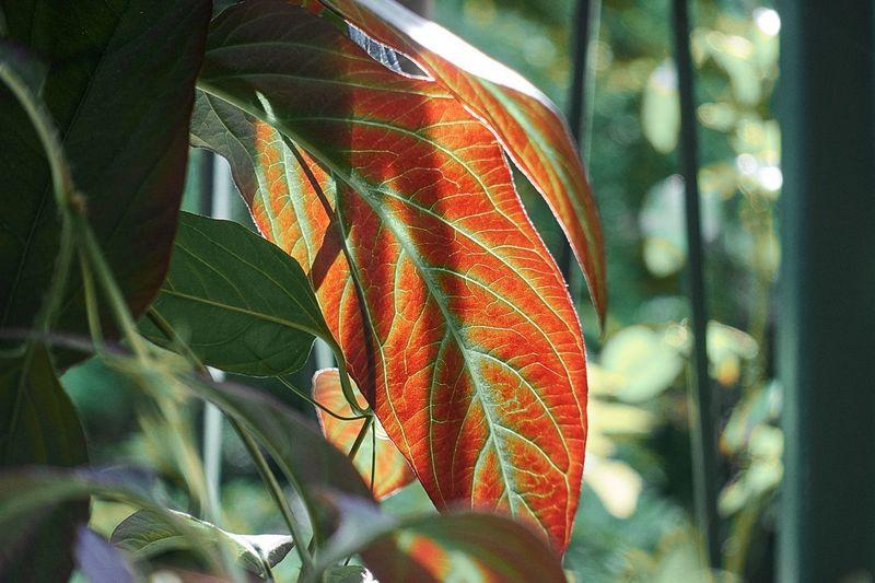 Close-up of orange leaf on plant