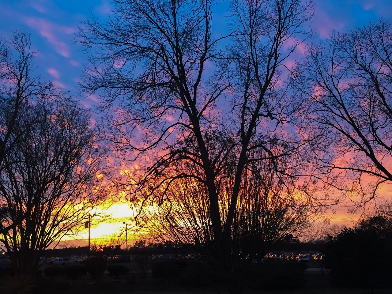 tree, bare tree, sunset, nature, beauty in nature, silhouette, tranquility, tranquil scene, sky, scenics, outdoors, no people, branch, landscape, growth, day