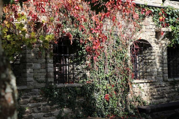 Flowering plants against old building