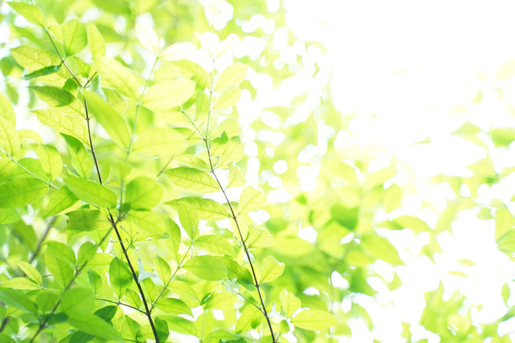 Natural green leaf background with selective focus. Closeup nature view of green leaf on blurred greenery background Leaf Plant Part Plant Growth No People Green Color Beauty In Nature Nature Close-up Day Full Frame Outdoors Freshness Backgrounds Tree Plant Morning Morning Light Nature Outdoor Park Sunshine Beautiful Blur Greenery Clear Environment Ecology Forest Freshness Garden Lush Season  Spring Summer Sunlight Sunny Background