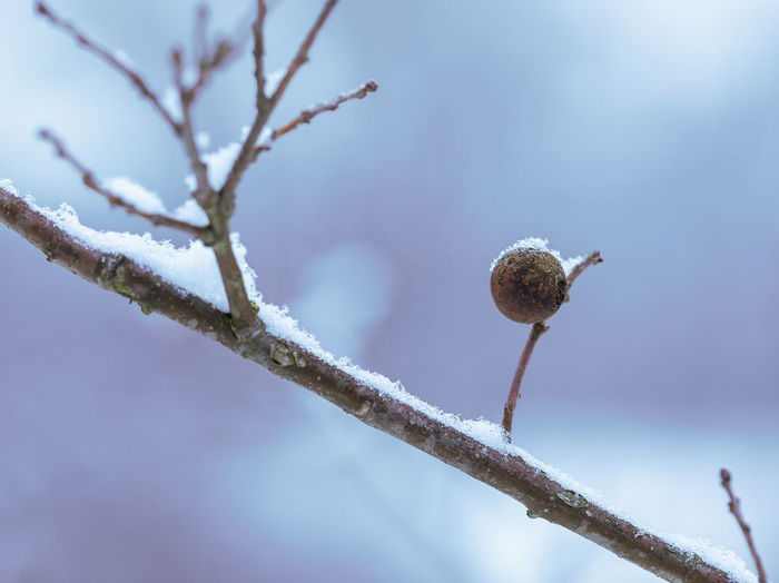 Low angle view of snow on plant