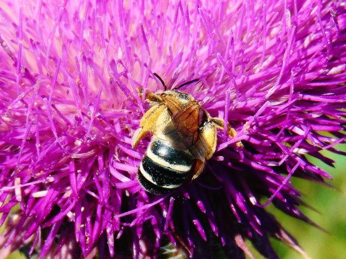 Detail Shot Of Bee On Flower