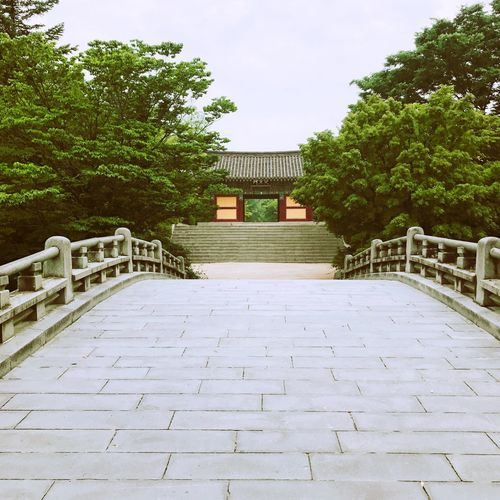 Architecture Built Structure Travel Destinations Tree Building Exterior History Sky Day Outdoors No People Nature Enterance Bulguksa Kyeongju Korea IPhone Photography IPhoneography IPhone History Through The Lens