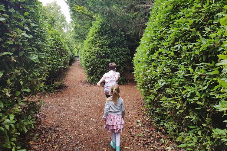 Moving Hedges Children Outdoors Tree Rear View Full Length Walking Childhood Plant Green Color Caucasian Preschooler