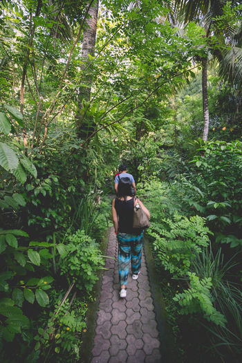 Path to the jungle teahouse Beauty In Nature Casual Clothing Day Footpath Forest Full Length Green Green Color Growth Jungle Leisure Activity Lifestyles Lush Foliage Nature Outdoors Plant The Way Forward Tranquility Tree Finding New Frontiers The Great Outdoors - 2018 EyeEm Awards The Traveler - 2018 EyeEm Awards