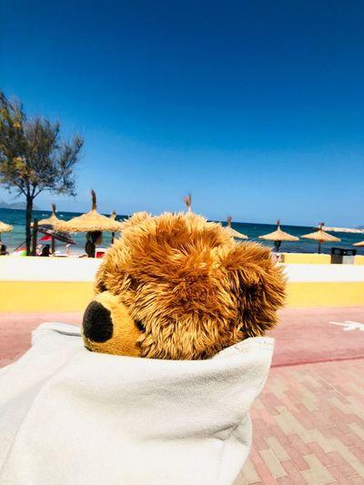 Teddybär im Rucksack Teddy Bear Mallorca Teddy Bear Summer EyeEm Selects Sky Nature Blue Sunlight Outdoors EyeEm Selects Sky Nature Blue Sunlight Outdoors Pets Fun