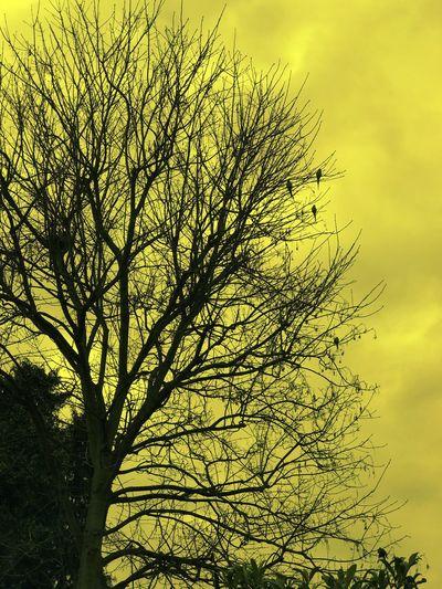Birds- Trees Birds Yellow Tint Sky Beauty In Nature Parrots