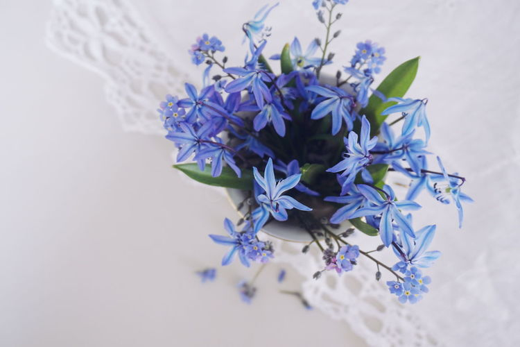 forget me not and scillas bouquet Forget Me Not Flower Forget Me Not Scilla Blue Blue Flowers White Background Top Top Perspective Copy Space Flower Head Flower Shadow Blue Purple Close-up Plant In Bloom In Bloom Lavender Wildflower Plant Life Petal Blooming Lavender Colored Flowering Plant Blossom
