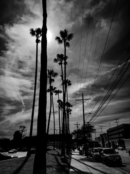 Shadows... Shot On IPhone IPhoneography Iphoneonly IPhone IPhone 7 Plus Iphonephotography IPhone Photography Sky Cloud - Sky Palm Tree Transportation Tree Car Outdoors No People Mast Day Black And White Bnw Sherman Oaks City Street Photography SoCal California Bnw_captures
