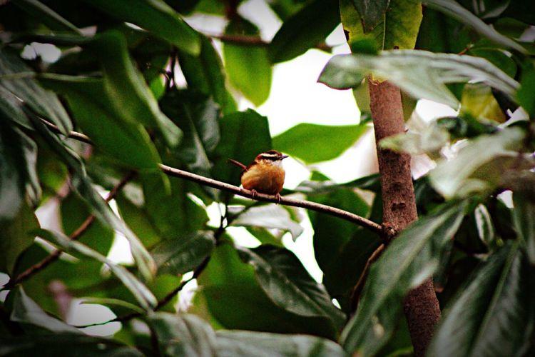 Cute birdy..