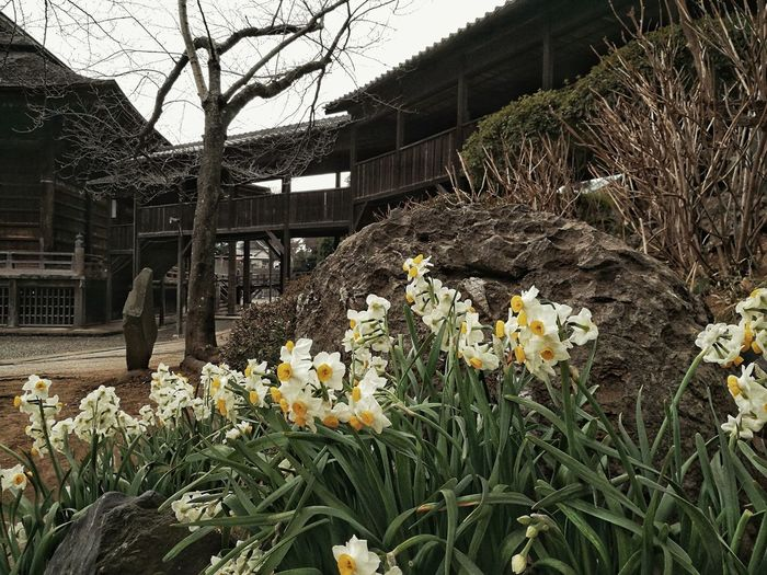 Flowers blooming by house against sky