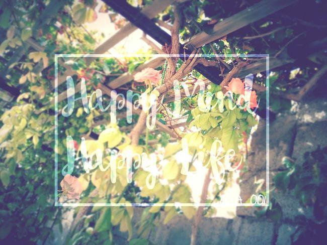من يحب الورد ؟?Who loves roses Day Nature London Italy Tunisia Qatar Turkey Nature Dubai Canda England South Africa Misurata Libya Love To Take Photos ❤ Love Amsterdam Scotland Flowers, Nature And Beauty America Flowers 🌸🌸🌸 Flowers,Plants & Garden Text Message Flower Photography