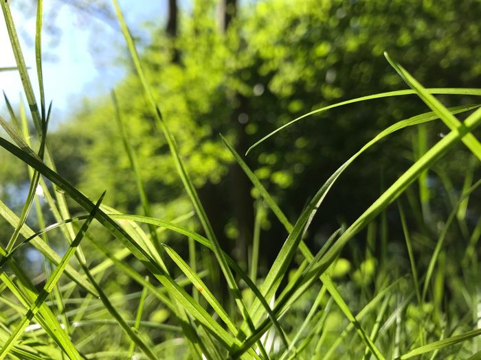 Plant Growth Green Color Nature Close-up Focus On Foreground Day