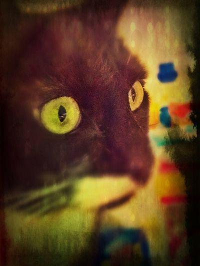 Neko Furmagoo Cat