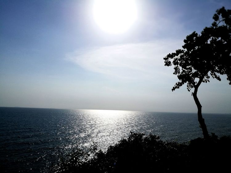 Sea Horizon Over Water Water Sun Nature Beauty In Nature Sunlight Beach Tranquility Outdoors Scenics No People Sky Tree Day