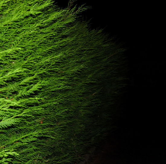 Beauty In Nature Close-up Day Field Grass Green Green Color Growth Hedge Live Fence Nature Night No People Outdoors