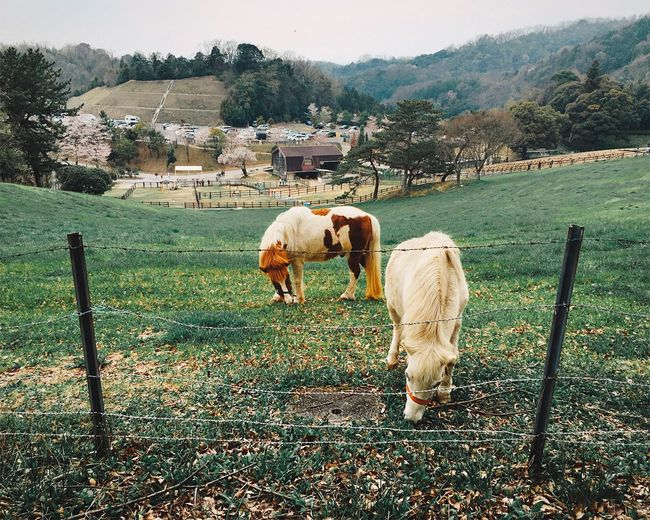 Showcase April EyeEm Nature Lover Nature Holiday Horse Horses Animals Animal Everyday Emotion The Portraitist - 2016 EyeEm Awards Ultimate Japan Fine Art Photography Adventure Club Adapted To The City